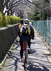 enoshimapota.jpg