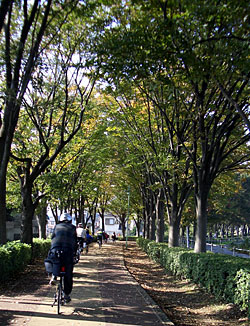sakawa_ice04.jpg